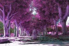 fioletowe drzewo Obraz Stock