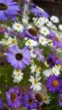 fioletowe kwiaty Zdjęcia Stock