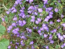 fioletowe kwiaty Fotografia Royalty Free