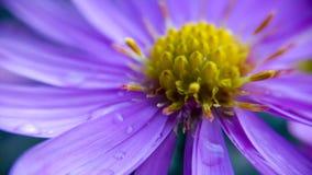 fioletowy kwiat Zdjęcia Stock