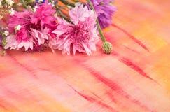 Fiordalisi rosa-blu luminosi su fondo Immagini Stock Libere da Diritti