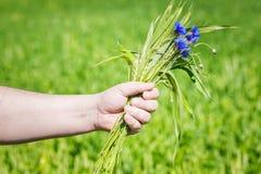 Fiordaliso con le orecchie del grano nella mano di Immagine Stock Libera da Diritti