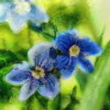 Fiordaliso del blu della pittura a olio due Fotografie Stock