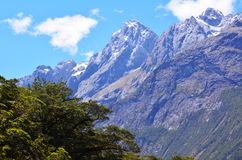 Fiordland - New Zealand Royalty Free Stock Image