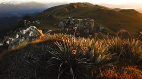 Fiordland Sunrise stock images
