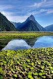 fiordlandmilford nya sound zealand Royaltyfri Foto