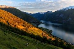 Fiordo Norvegia di Stegastein Aurland Fotografia Stock