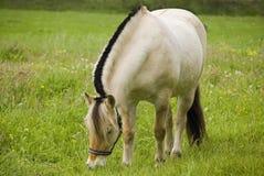 fiordu konia po norwesku Obrazy Royalty Free