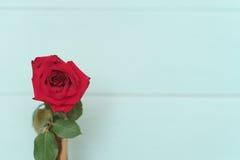 Fiore - è aumentato Fotografia Stock Libera da Diritti