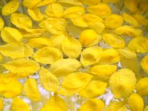 Fiore in 03 tailandesi Fotografia Stock Libera da Diritti