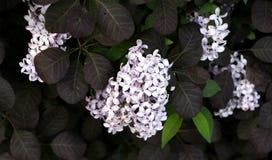 Fiore 003 Fotografia Stock