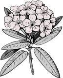 Fiore illustrazione di stock