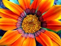 fiore Fotografia Stock Libera da Diritti