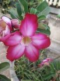 Fiore Immagini Stock