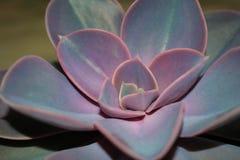 Fiore 3 Fotografia Stock