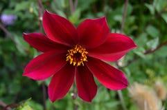 Fiore abbastanza rosso immagini stock