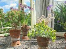 Fiore ai giardini botanici nazionali di Dublino Immagine Stock Libera da Diritti