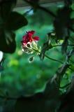 Fiore al sole Immagini Stock