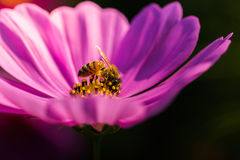 Fiore all'aperto dell'universo Fotografie Stock Libere da Diritti