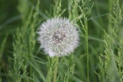 Fiore all'aperto di immagine della margherita di fotografia del primo piano della natura fotografia stock