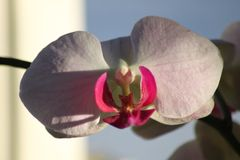 Fiore all'interno 2014 Fotografia Stock