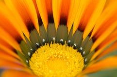 fiore all'interno della macro Fotografia Stock