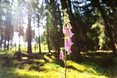 Fiore alla luce Fotografie Stock Libere da Diritti