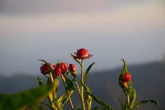 Fiore alla mattina del sole Immagini Stock