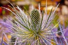 Fiore alpino Immagini Stock