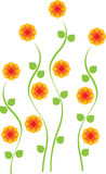 Fiore alto giallo luminoso della margherita Fotografia Stock Libera da Diritti