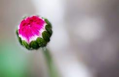 Fiore (anthos, flos) Fotografia Stock Libera da Diritti