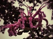 Fiore appuntito rosa fotografie stock libere da diritti