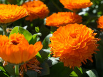 Fiore arancio immagine stock