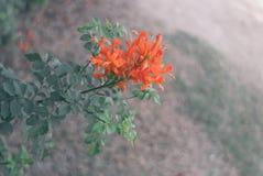Fiore arancio Immagini Stock Libere da Diritti