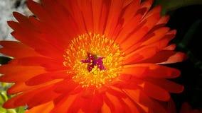 Fiore arancio Immagini Stock