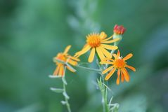 Fiore arancio della foresta Fotografia Stock