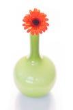Fiore arancio della margherita della gerbera Fotografie Stock Libere da Diritti