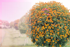 Fiore arancio per fondo Immagine Stock Libera da Diritti