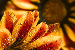 Fiore arancione Fotografia Stock Libera da Diritti