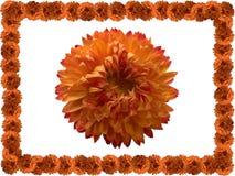 Fiore arancione. Immagini Stock Libere da Diritti