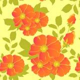 Fiore arancione Fotografie Stock Libere da Diritti