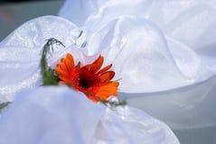 Fiore arancione di cerimonia nuziale su raso bianco Fotografia Stock
