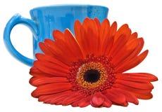 Fiore arancione isolato con il percorso di residuo della potatura meccanica blu della tazza Immagine Stock Libera da Diritti