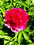 Fiore ardente fotografia stock libera da diritti