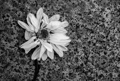 Fiore arrugginito di decomposizione astratto fotografia stock libera da diritti