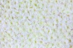 Fiore artificiale bianco fotografia stock libera da diritti