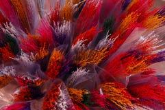 Fiore asciutto Colourful nel gruppo Immagini Stock Libere da Diritti