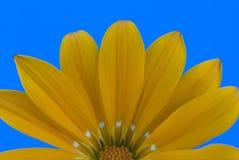 Fiore astratto immagini stock