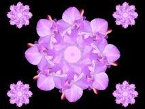 Fiore astratto dell'orchidea di disegno grafico Fotografia Stock