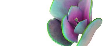 Fiore astratto nei colori pastelli Immagine Stock